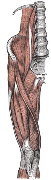Knee Tendinosis
